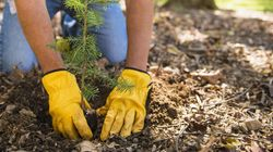 Earth Day: Planting A Tree Is An Investment In Our
