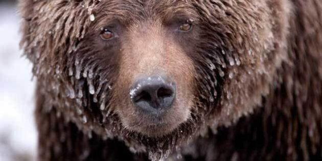 'Wild Canada': CBC Nature TV Show Showcases Canada's