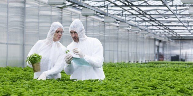 Germany, Bavaria, Munich, Scientists in greenhouse examining parsley
