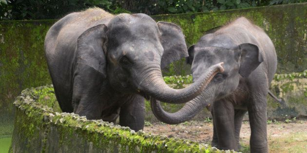 KOLKATA, WEST BENGAL, INDIA - 2016/08/12: Zoological Garden, Alipore, Kolkata observe World Elephant...