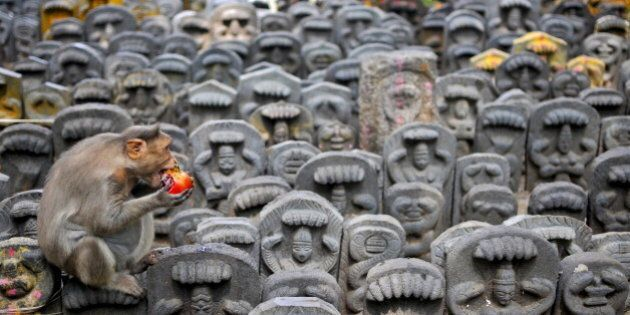 A bonnet macaque sits on consecrated idols of snakes as it eats a pomegranate fruit left behind as an...