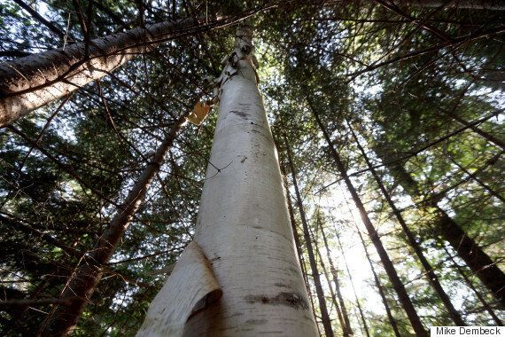 Canada's Role As Steward Of The World's Forests