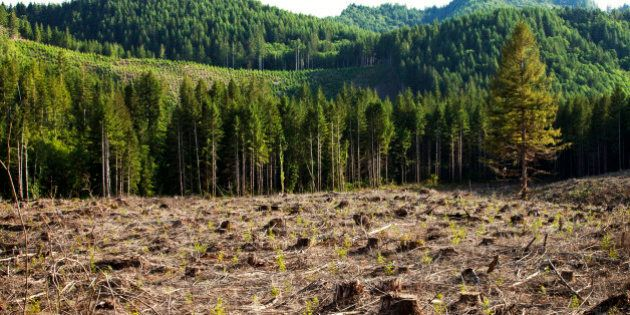 Collaboration Is Critical For Forest