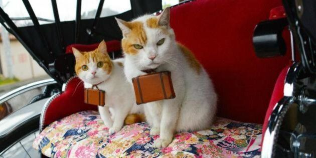 Nyalan And Deshi, Japanese Cat Tour Guides, Are All Sorts Of Adorable