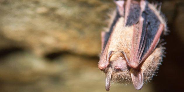 A close up of a Tri-colored