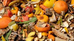 Dealing With Wasted Food By Planting Seeds Of