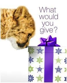 Tis the Season to Give. Here's Why!