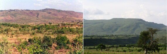 How Tree-Planting Brings Life To The World's