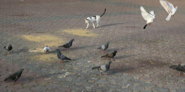 A cat checks on pigeons, Dubai, United Arab Emirates,