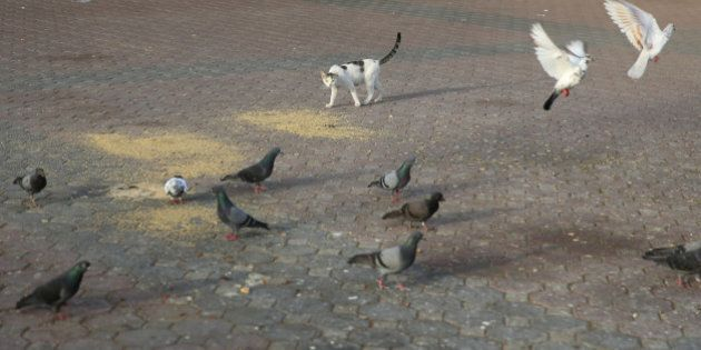 A cat checks on pigeons, Dubai, United Arab Emirates, 2014.