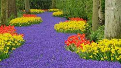 LOOK: Springtime Spots Where Colours Reign