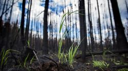 Restoring Fort McMurray's Urban Forest Our Greatest Challenge