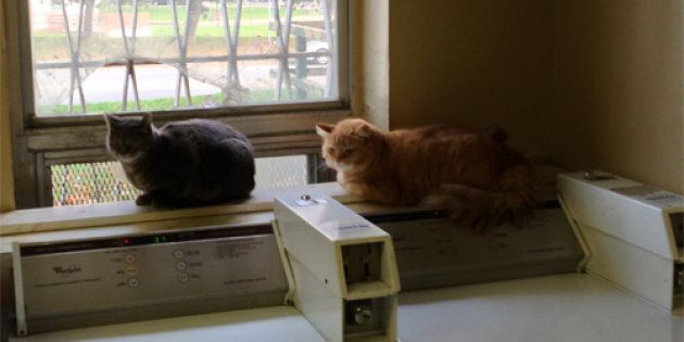 Adopt-a-HuffPet: Give These Bonded Cats a