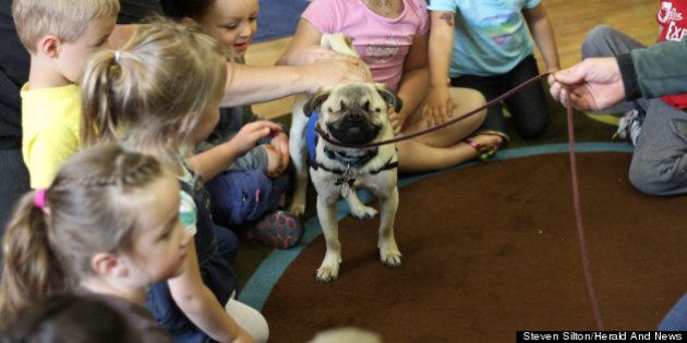 Xander The Blind Pug Warms Hearts As Therapy