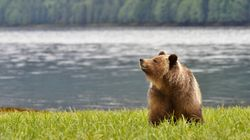It's Time To Protect The Great Bear Rainforest's