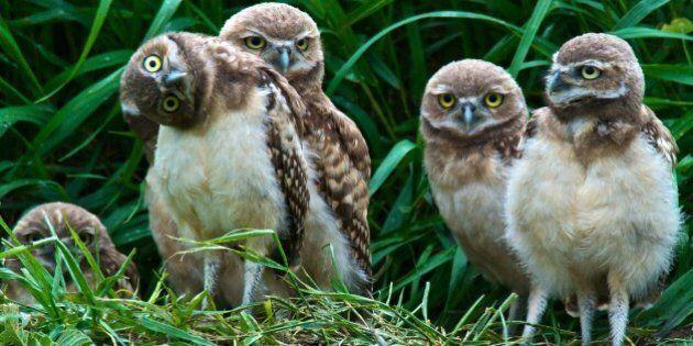 Misusing Biodiversity Offsets Creates The Illusion Of