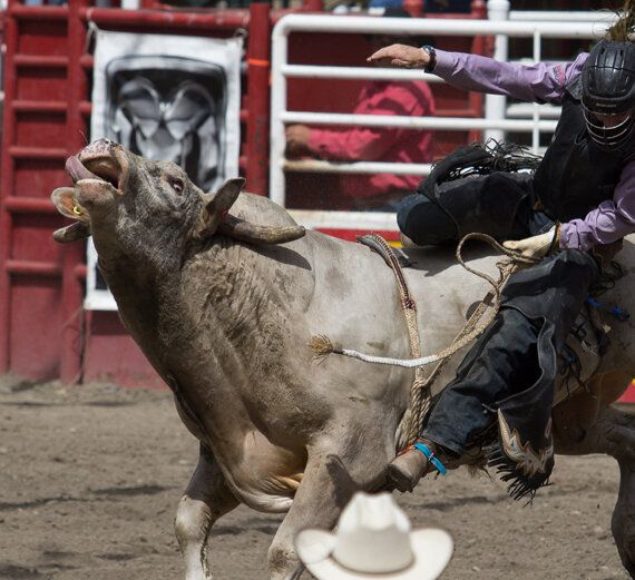 Rodeo Animals Aren't Performing, They're