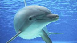 Ocean Tales: Making Dolphin