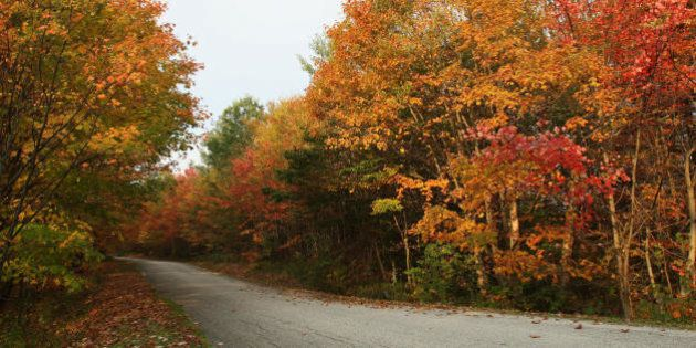 Leaves display fall colors 06 October 2007 on the road to Woodford State Park in Woodford, Vermont. Fall...
