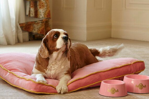 The Best Pet Paradise Spots Around The
