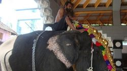Heart Breaking Stories Of Temple Elephants Of