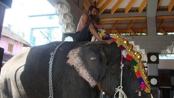 Heart Breaking Stories Of Temple Elephants Of