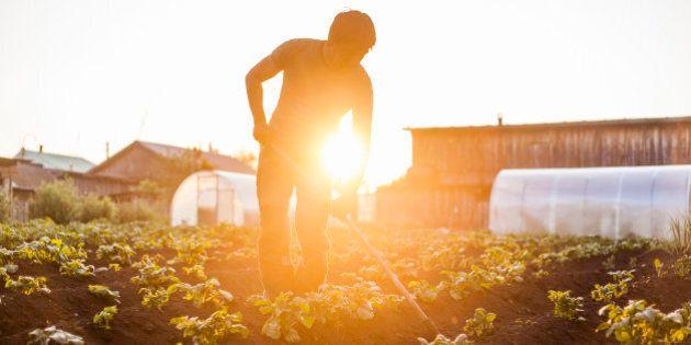 Mari farmer tending to crops in rural