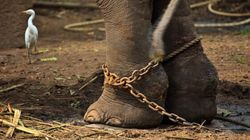Kerala's Elephants Are Under The Lens Of Supreme Court Of