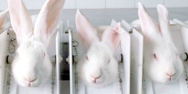 It Is Time Canada Banned Cosmetic Animal