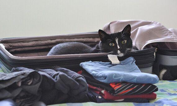 Do Pets Really Make Good Travel