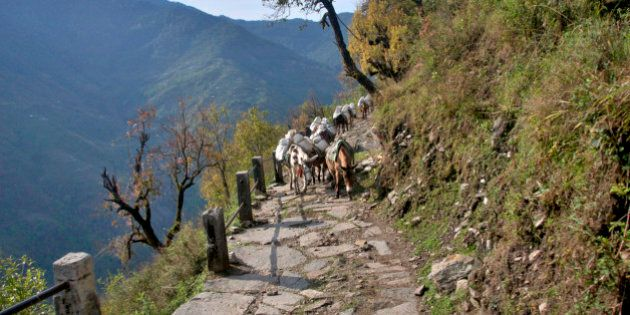 Trekking in Annapurna, on the way from Ghorepani (Poon Hill) to