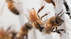 Honeybees And Butterflies At Risk After Freezing