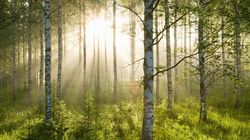 Canada Needs a National Urban Forest