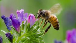 Wild Bees Need Our Protection