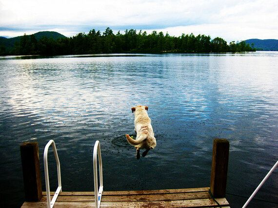 5 Places to Visit With Your Pet This