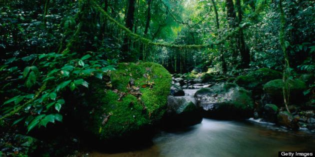 Darien National Park, Darien, Panama, Central America