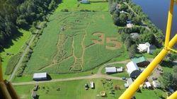 Incredible Corn Maze Honours Terry Fox Marathon