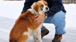 Quebec Dog Shot In Head, Left In