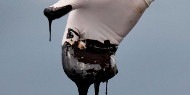 FILE - In this June 15, 2010 file photo, a member of Louisiana Gov. Bobby Jindal's staff wearing a glove reaches into thick oil on the surface of the northern regions of Barataria Bay in Plaquemines Parish, La. U.S. District Judge Carl Barbier ruled Thursday, Sept. 4, 2014, in New Orleans, La., that BP acted recklessly and bears most of the responsibility for the oil spill. The ruling exposes BP to about $18 million in civil fines under the Clean Water Act. (AP Photo/Gerald Herbert, File)