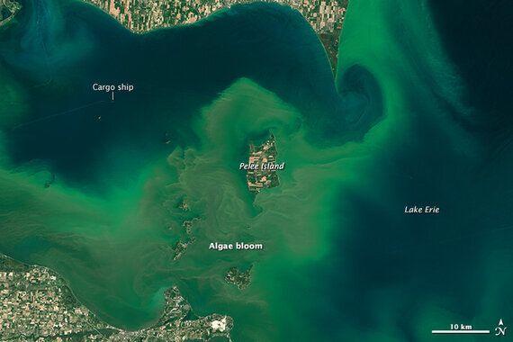 Action Must Be Taken to Reduce the Algal Blooms Choking Lake