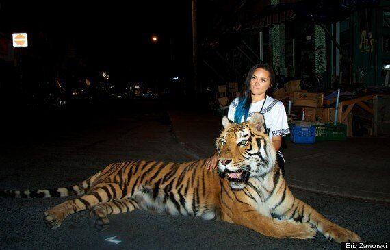 Rapper Tasha The Amazon Takes Tiger For A Stroll In Downtown