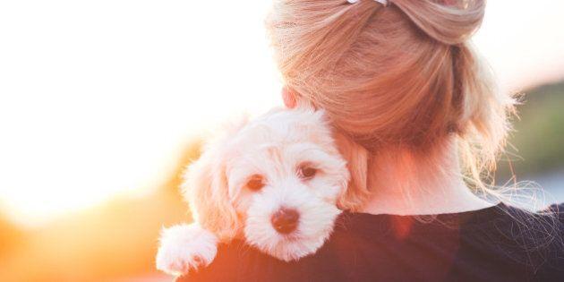 Girl with a young dog enjoying a beautiful