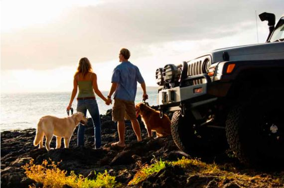 Top 10 Tips To Make Travelling With Your Dog