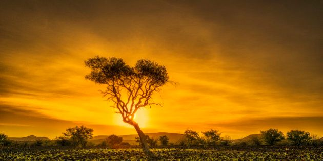 Palmwag Nature Reserve with acacia tree at sunset. This reserve is in the Kunene region, in north-western...