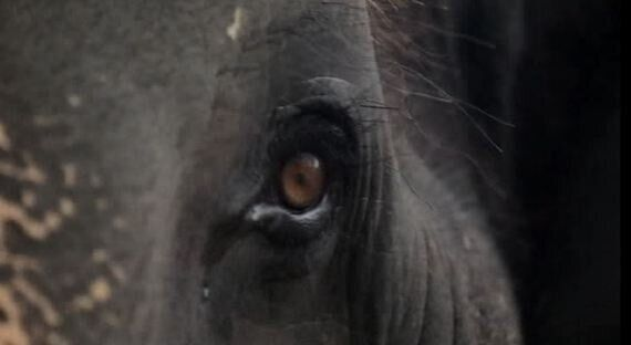 My Documentary Will Explore the Story of an Elephant Tortured to