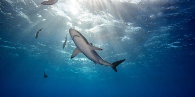 The Decline of Sharks Spells Trouble for