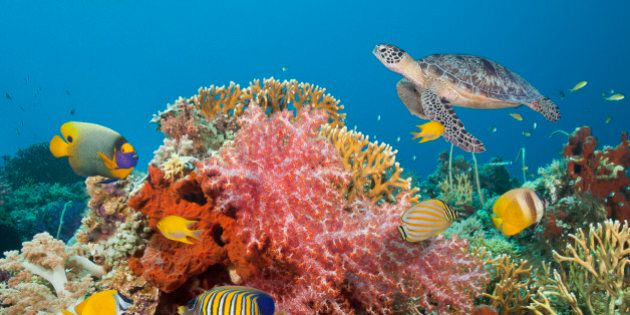 Saving the World's Coral, One Reef at a