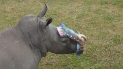 Young Rhino Named Hope Survives Brutal Attack After Being Left For