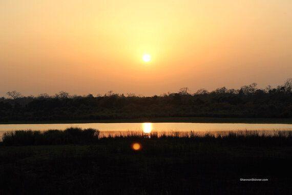 My Safari Adventure Through an Indian Wildlife