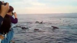 WATCH: Woman's Reaction To Whales Is Pure